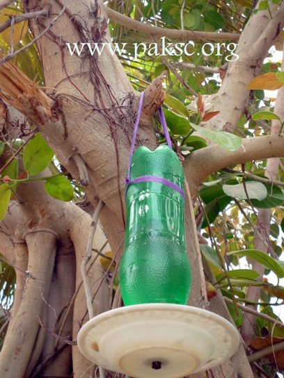 DIY water Feeder for wild bird from pet bottle | Science fair projects and experiments | Scoop.it