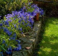 Plantabandas herbáceas | Jardineria | reproducción de plantas | Scoop.it