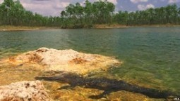 Piden a Obama fondos para restaurar los Everglades | Comunicación, Conocimiento y Cultura del Agua | Scoop.it