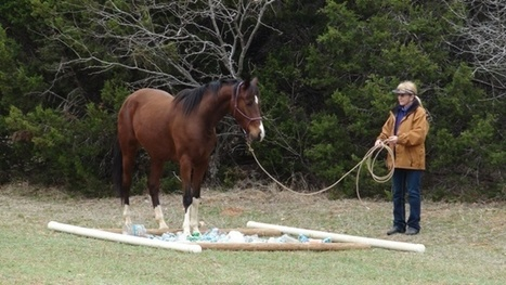 5 Obstacle Challenges To Prep Your Horse For Trail Riding   The Natural Horse   Scoop.it