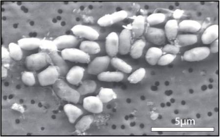 Bactéries à l'arsenic : résultats mis à mal   Beyond the cave wall   Scoop.it