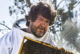 Scientist strives to save honey bees   Farming, Forests, Water, Fishing and Environment   Scoop.it