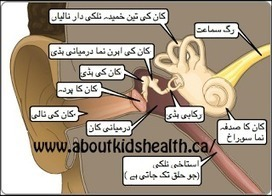 Ear Pain and Infection Treatment in Urdu | Health and Skin Care in Urdu | Health Tips in Urdu | Scoop.it