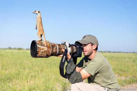 Photographing Meerkats | Design Ideas | Scoop.it