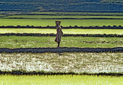 Betting on the Farm: Africa's Drive for Food Self-Sufficiency | Think Africa Press | NGOs in Human Rights, Peace and Development | Scoop.it