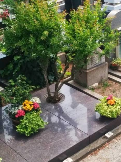 Forget Coffins: These Burial Pods Will Let You Turn Into A Tree When You Die | Innovation Cultures | Scoop.it