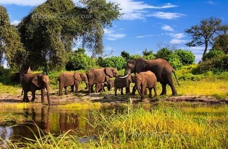 Trend of Trophy Hunting Ban is Promising for African Wildlife | Trophy Hunting: It's Impact on Wildlife and People | Scoop.it