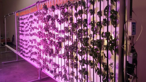 Fresh with an attitude ... a new paradigm | Vertical Farm - Food Factory | Scoop.it