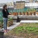 Des potagers fleurissent sur les toits de Paris | Économie circulaire locale et résiliente pour nourrir la ville | Scoop.it