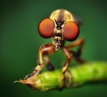 Macro Photography Approach | Macro And Smartphone Photography | Scoop.it