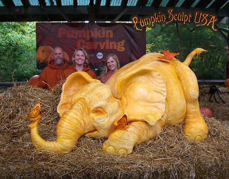 Elephant sculpture carved out of huge 400 KG pumpkin | Machinimania | Scoop.it
