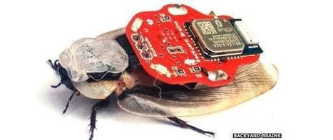Cockroach Backpack App Controls Insects via iPhone - I4U News | Bug Hugger | Scoop.it