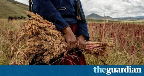Quinoa isn't a threat to food security. It's improving Peruvian farmers' lives   critical reasoning   Scoop.it