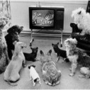 Some animals see a tv | 2 dogs are very happy | Scoop.it