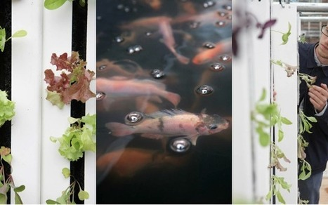 Reclaimed Shipping Container Produces Sustainable Fish - PSFK   Aquaponics~Aquaculture~Fish~Food   Scoop.it