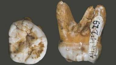 Des rétrovirus fossiles confirment l'histoire évolutive des homininés | Aux origines | Scoop.it