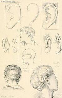 Guida di riferimento al disegno dell'orecchio | Circolo d'Arti | Scoop.it