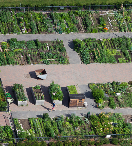 Urban Agriculture Rezoning | Boston Redevelopment Authority | Urban Agriculture | Scoop.it