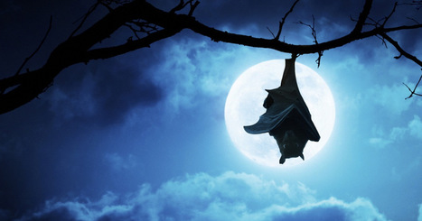 The Monster That Terrorized Tanzania | Digital-News on Scoop.it today | Scoop.it