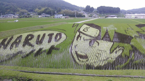 Japan's Amazing Rice Paddy Art Continues to Dazzle - Kotaku | Cool Art | Scoop.it