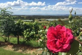 Significance of Hunter wine region overlooked: historian | Viticulture | Scoop.it