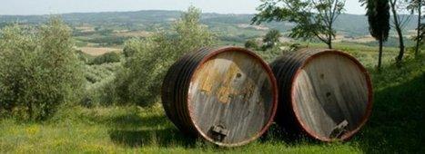 Vin italien: les mille et un cépages   Vignes et vins   Scoop.it