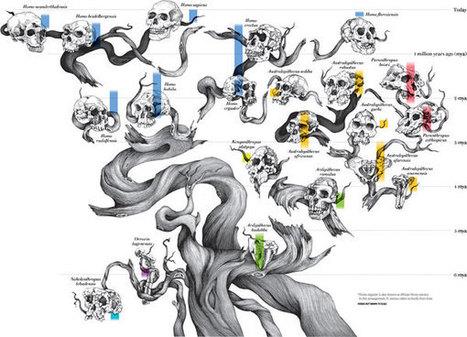 The Origin of Humans Is Surprisingly Complicated | Arqueología, Prehistoria y Antigua | Scoop.it