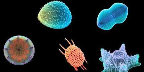 La recette étonnante des microalgues pour faire du verre | Biodiversité | Scoop.it