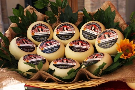 Casciotta of Urbino: Michelangelo's favourite cheese | Le Marche and Food | Scoop.it