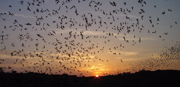 PETA Goes to Bat for Bats | Nature Animals humankind | Scoop.it