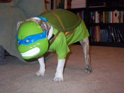Cosplay of the day: TMNT dog | All Geeks | Scoop.it