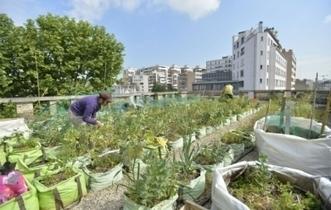 Paris va verdir, des trottoirs jusqu'aux balcons - leJDD.fr | Jardins urbains | Scoop.it