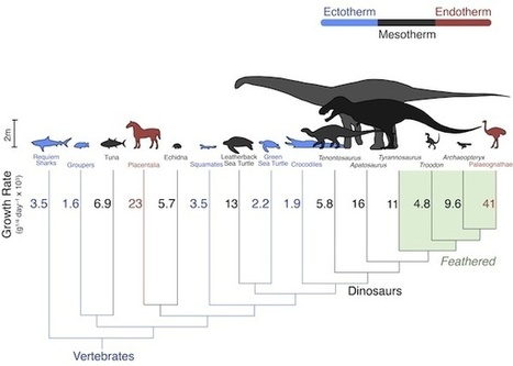 Were Dinosaurs Warm Or Cold Blooded? | IFLScience | Nature Science | Scoop.it
