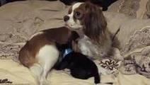 Cette chienne a sauvé la vie de ce chat. Aujourd'hui, elle est une vrai mère pour lui | CaniCatNews-actualité | Scoop.it