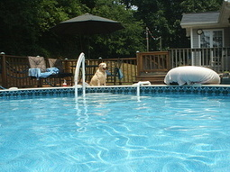 10 Easy Tips for Cleaning Your Outdoor Swimming Pools for Summer | pool cleaning service Suggestions and Tips in Roswell | Scoop.it
