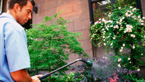 Green Landscaping In New York City - CBS Local | Landscaping & Gardening | Scoop.it