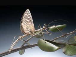 Made in St. Louis: Metal artist creates insects and plants - STLtoday.com | Bug Hugger | Scoop.it
