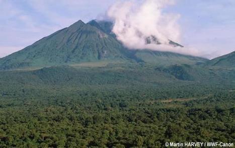 Le Parlement fédéral belge veut sauver le Parc national des Virunga de la menace pétrolière | Virunga - WWF | Scoop.it