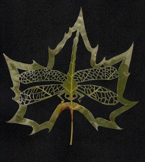 New York Botanical Gardens - Leaf art | Plant Biology Teaching Resources (Higher Education) | Scoop.it