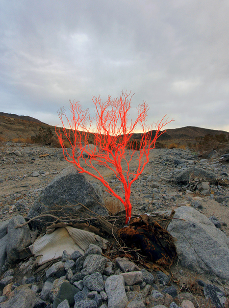 Cristopher Cichocki:  Land Spore (Desert Reserve) | Art Installations, Sculpture, Contemporary Art | Scoop.it