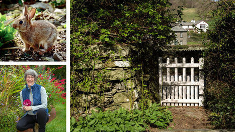 A Garden of Creature Comforts - New York Times | FLORALINK Garden and Landscape Architecture News. | Scoop.it