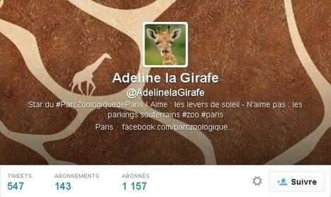 Adeline, la girafe qui tweete du Parc zoologique de Paris | Réseaux sociaux LIVE | Scoop.it