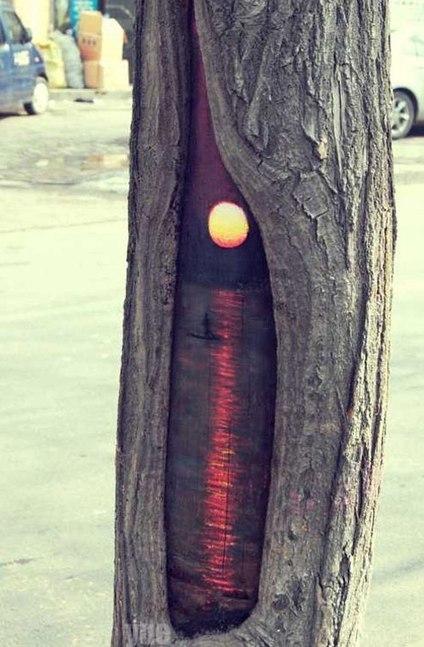 ALLPE: Trampantojos animales (en árboles) | BROTES DE NATURALEZA | Scoop.it