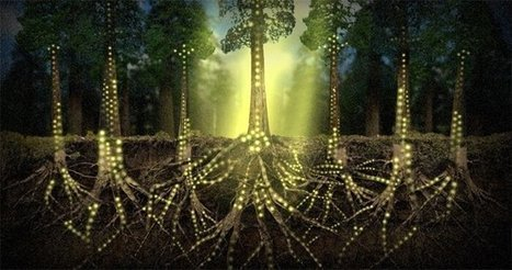 Plants Communicate Using An Internet of Fungi | Ayahuasca  アヤワスカ | Scoop.it
