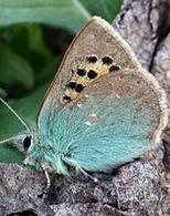 Seize papillons de jour menacés de disparition en France métropolitaine... | EntomoNews | Scoop.it