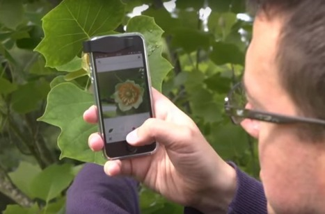 The 'Shazam' For Plants Will Identify Any Plant From A Picture | Media Aesthetics Lab | Scoop.it