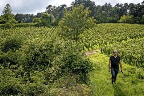 La colère bio. Emmanuel Giboulot, vigneron combattant | Toxique, soyons vigilant ! | Scoop.it