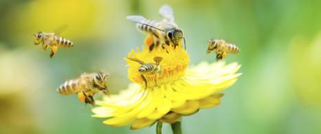 Une preuve de plus que certains insecticides tuent les abeilles   Nature, climat, environement et santé   Scoop.it