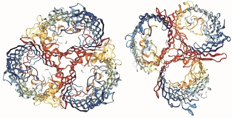 Biologists Watch Speciation in a Laboratory Flask | DNA and RNA Research | Scoop.it