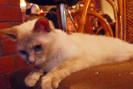 Neko Bar Akanasu di Tokyo, Kafe Kucing untuk Dewasa | Otak Jepang | OtakJepang | Scoop.it